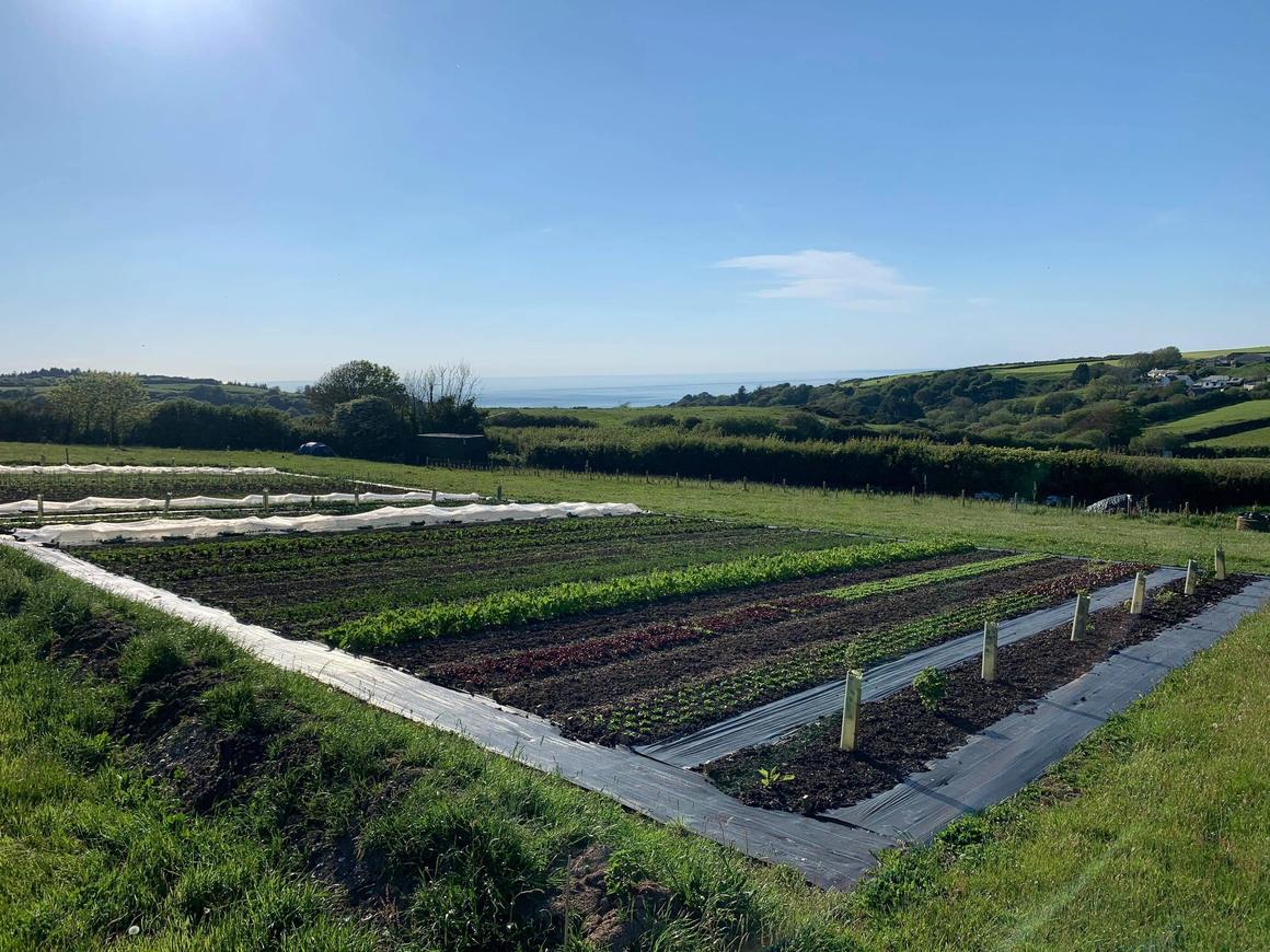 Amary-Farm-image