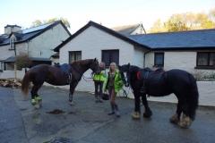Horses_539x367